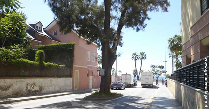 Árbol en la Calle, Málaga.