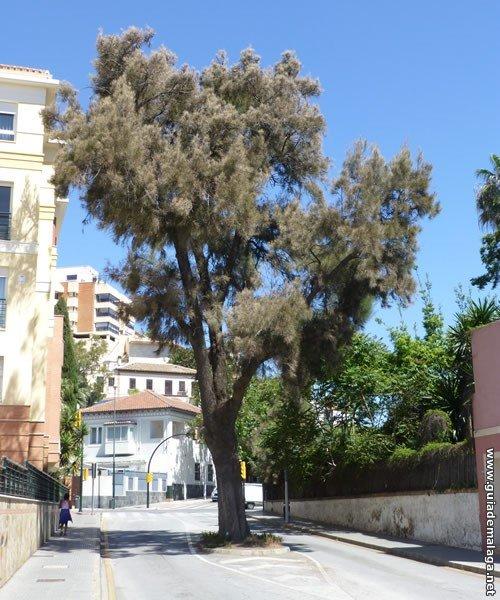 Árbol en la Calle
